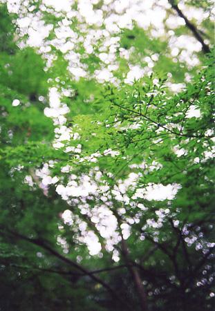 200509_tree