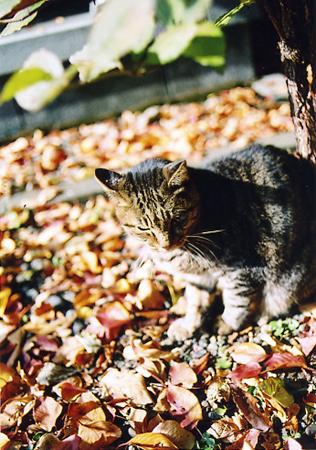 200511_cat