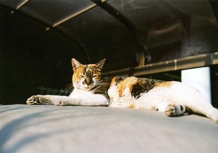 200511_cat2