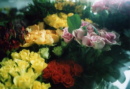 200511_flower2