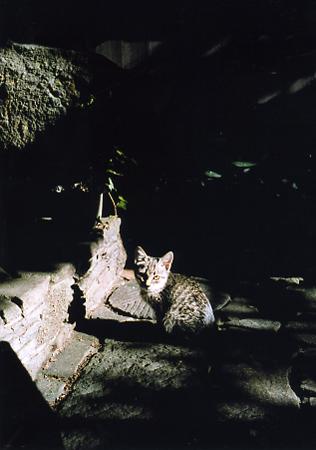 200511_kitty