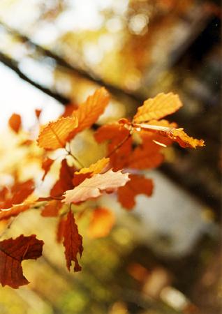200511_leaves