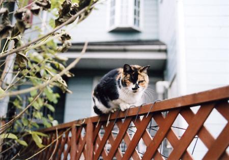 200512_cat