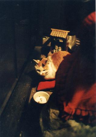 200512_fukuneko